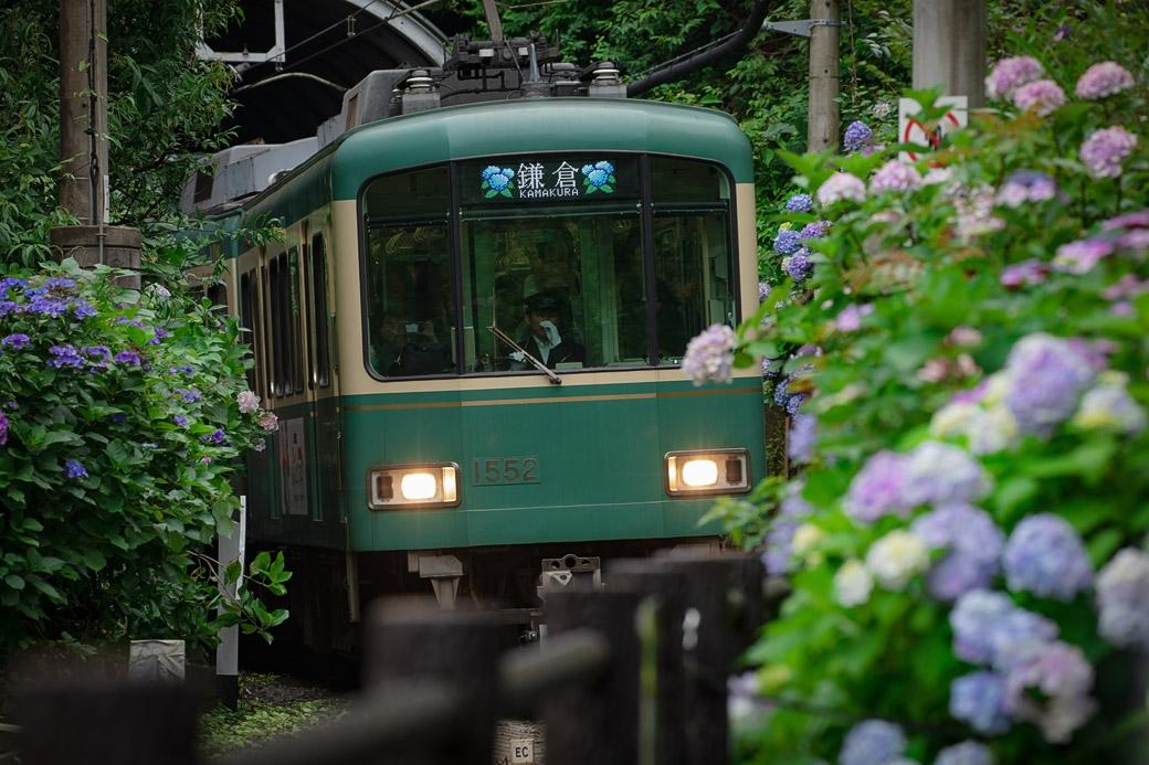 鎌倉の紫陽花を楽しむ寺巡りと、パーラー扉のパングラタン