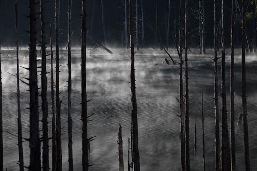 朝霧が舞う立ち枯れの湖・御岳自然湖の紅葉と、王滝食堂のいのぶた丼